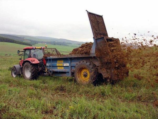 Органическое удобрение озимой пшеницы