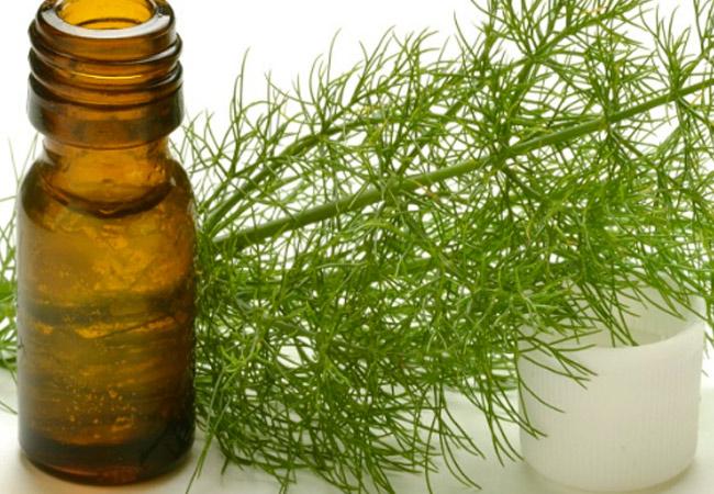 Эфирное масло укропа: применение при заболеваниях