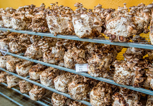 Как должен быть оборудован подвал для выращивания грибов