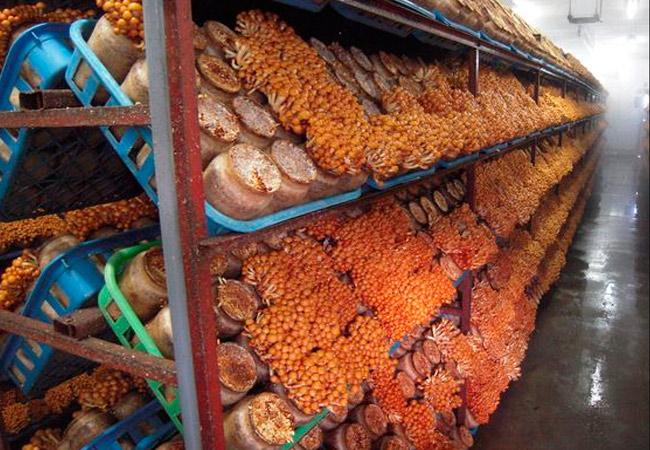 Условия выращивания грибов в подвале