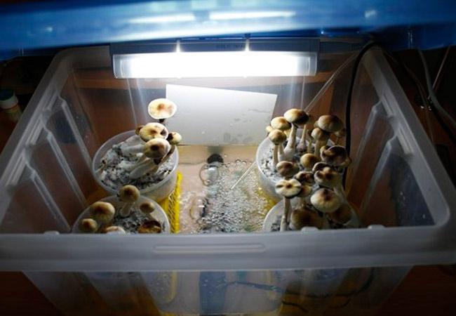 Осветительные приборы для выращивания грибов