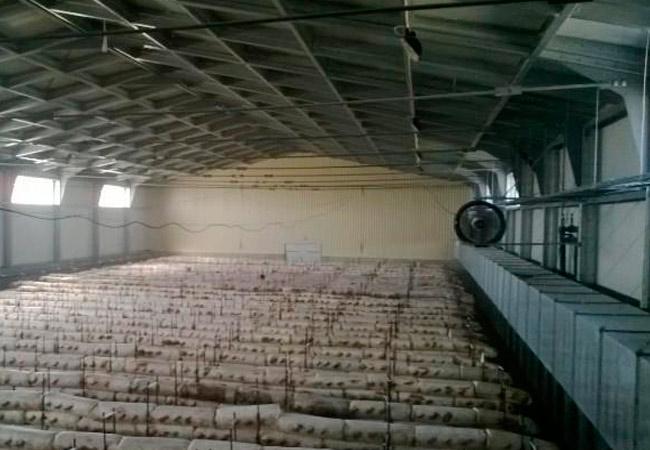 Помещения для выращивания грибов