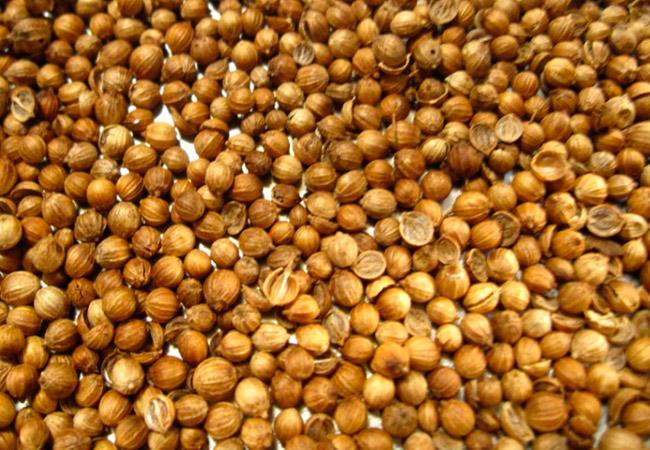 Противопоказания к применению семян кинзы