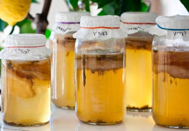 Чайный гриб: как правильно ухаживать