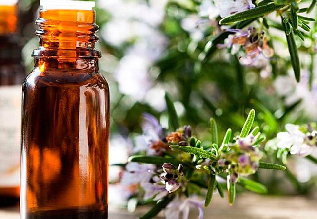 Химический состав эфирного масла розмарина