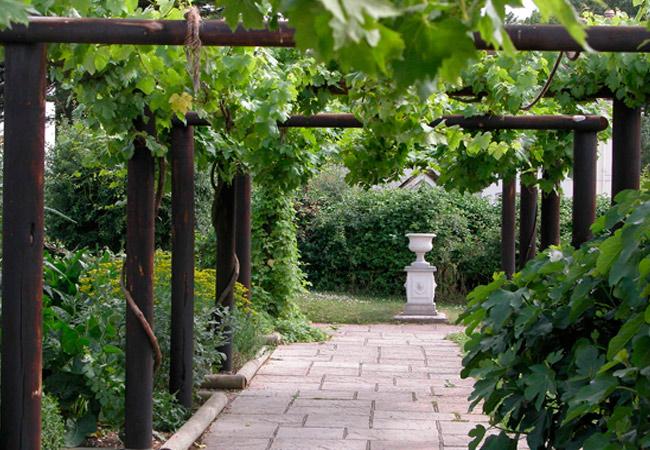 Виноград: совместные посадки