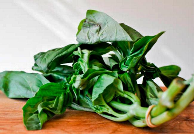 Как заготовить базилик в домашних условиях