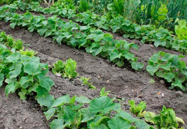 Выбираем место для выращивания арбузов