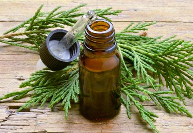 Масло можжевельника: применение в ароматерапии