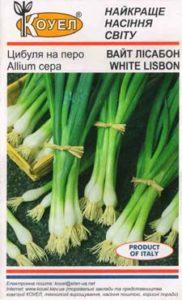 Лук Лиссабон из семян: выращивание на подоконнике