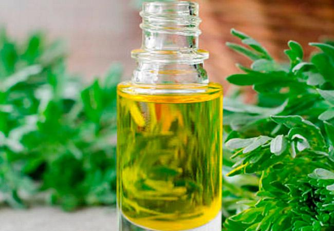 Различия в эфирных маслах полыни и применение