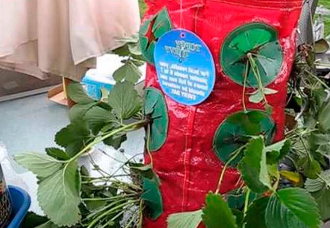 Специальные мешочные емкости для выращивания клубники