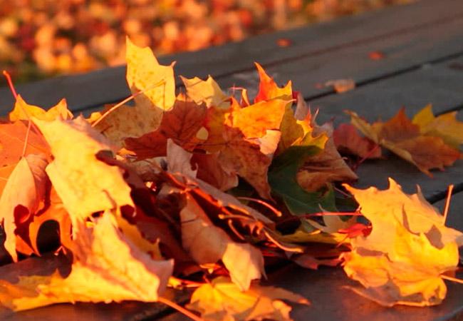 Слой опавшей листвы в грядках
