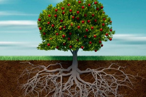 Как защитить корни растений от замерзания