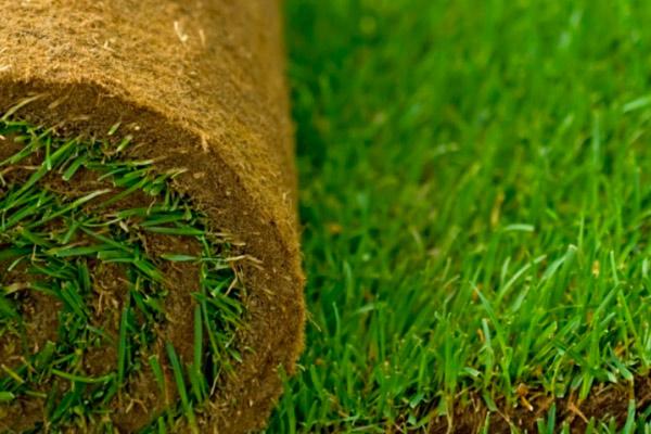 Как уложить рулонный газон