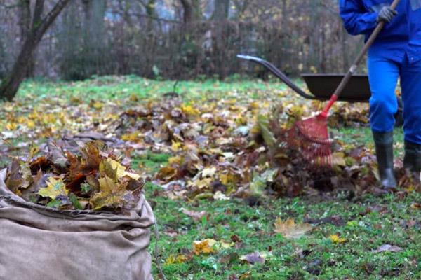 Приготовление листового перегноя