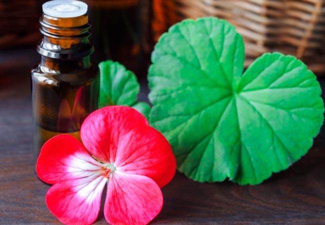 Кокосовое масло для лица: польза для кожи. Способы применения кокосового масла для лица, губ, эффективность против прыщей