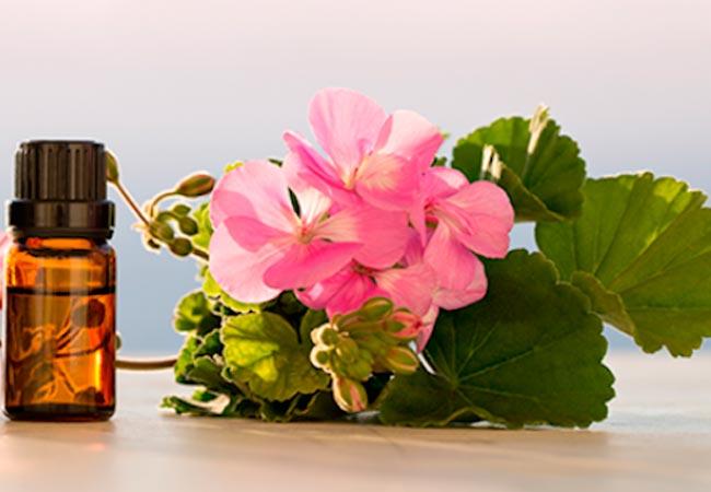 Рецепты с эфирным маслом герани в лечении болезней