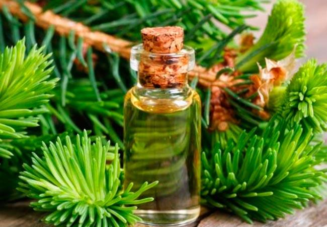 Описание и состав эфирного масла сосны