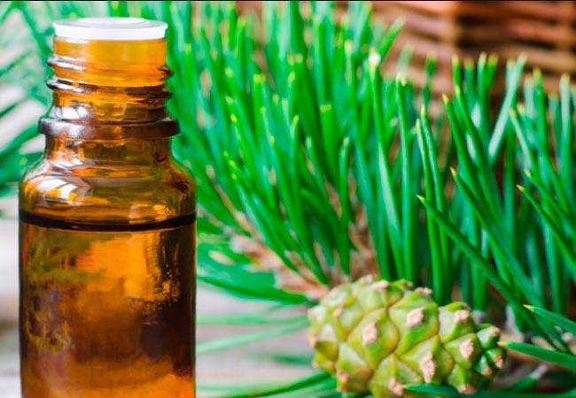 Применение эфирного масла сосны