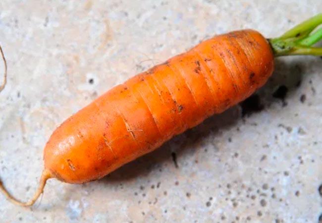 Семена моркови лучшие сорта