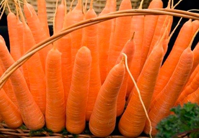 Лучшие семена моркови, поздние сорта