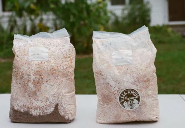 Применение пакетов для выращивания грибов на субстрате