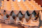 Посадка редиса в ячейки из-под яиц