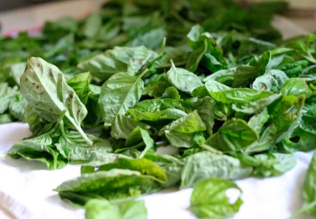 Как самостоятельно засушить шпинат на зиму