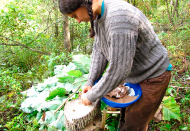Как подготовить пни для получения грибов