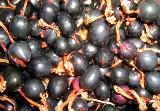 Вино из актинидии (йошты)