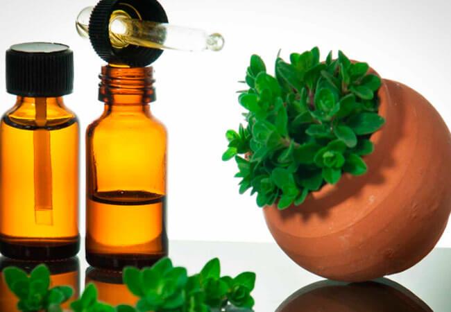 Эфирное масло орегано: полезные свойства