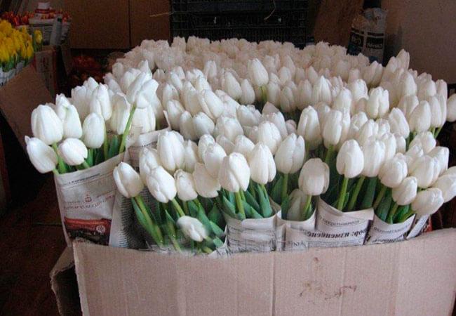 Как хранить срезанные цветы тюльпанов