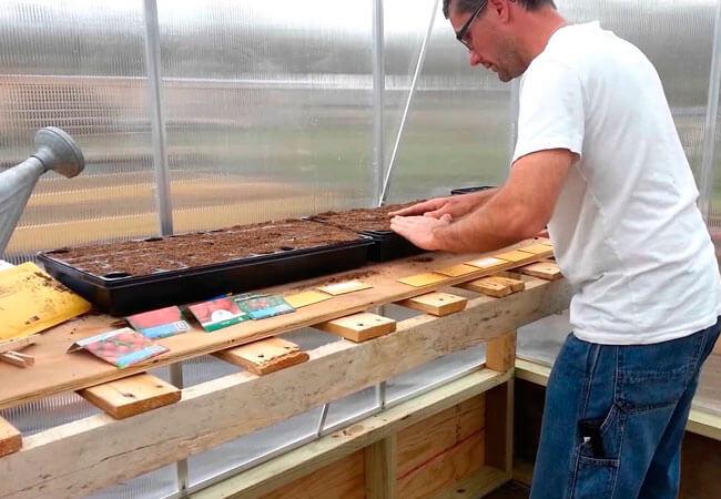Как выращивать помидоры из семян в парнике