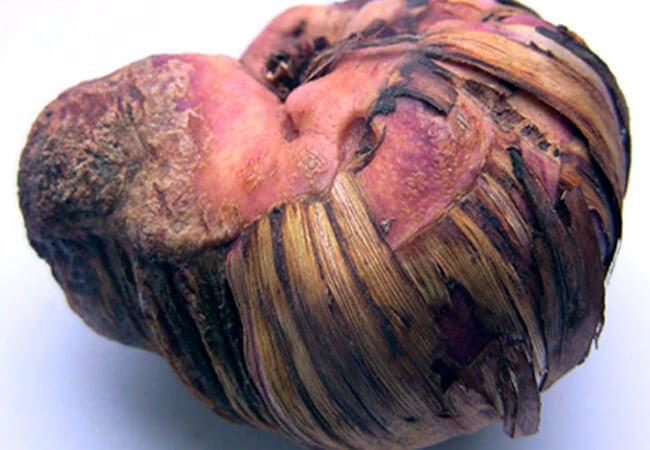 Рак гладиолусов