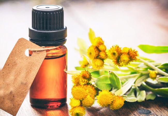 Эфирное масло бессмертника полезные свойства