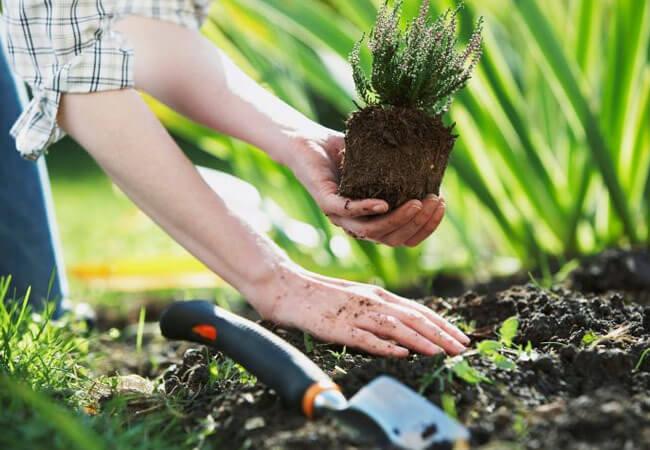 Фаза роста у растений