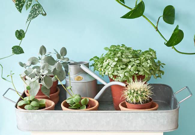 Лунный календарь пересадки комнатных растений 2019