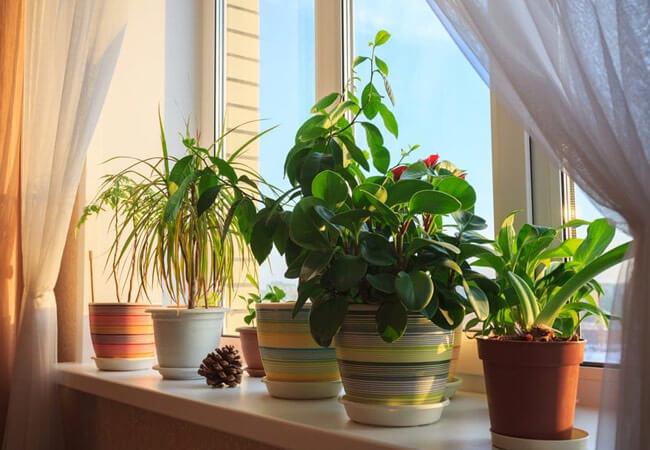 Как пересадить растения по лунному календарю