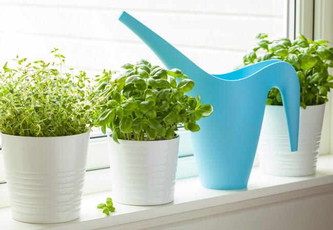 Таблица полива комнатных растений в 2019 году
