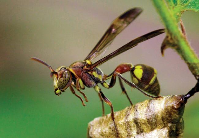 Как избавиться от пчел и ос на даче