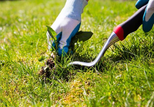 Как вывести сорняки из газона