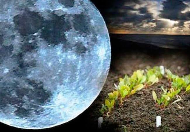 Лунный календарь садовода 2019