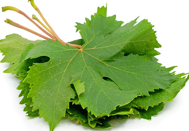 Состав виноградных листьев и их применение в медицине