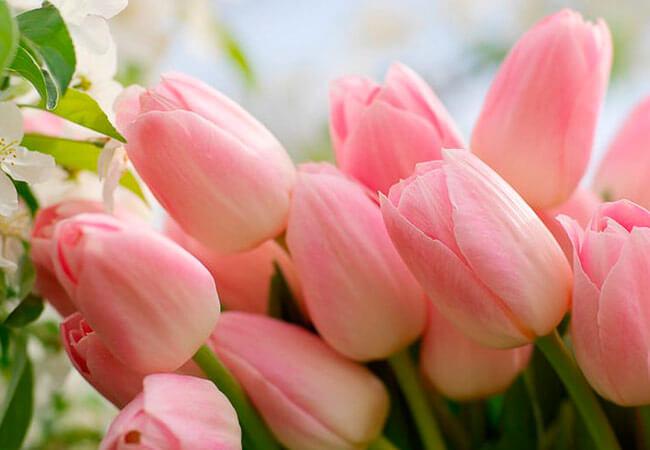 Благоприятные дни для посадки тюльпанов осенью в 2019 году по лунному календарю