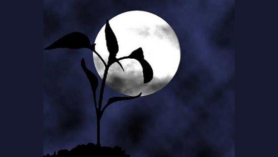 Лунный календарь садовода огородника на 2021 год