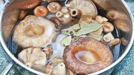 Грибы волнушки - виды, описание, рецепты приготовления
