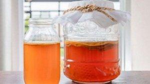 Чайный гриб – полезные свойства и противопоказания