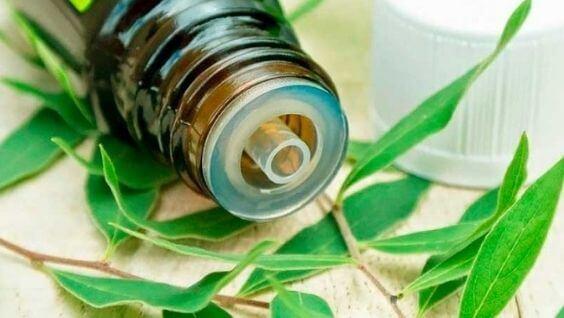 Лучшие эфирные масла противовирусные