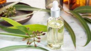 Эвкалиптовое масло: лечебные свойства и применение